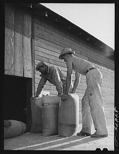 Photo Taking sacked wheat into warehouse for storage TouchetWalla WallaWashington