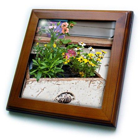 3dRose Danita Delimont - Garden - Spring garden display in containers in old wooden drawer - 8x8 Framed Tile ft_251039_1