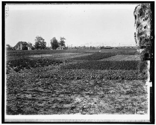 HistoricalFindings Photo National Emergency Food GardenWorld War IWWIUnidentified Locationc19159
